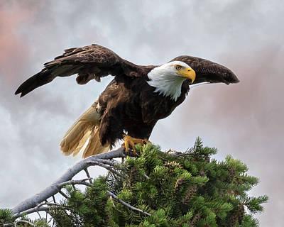 Photograph - Pre Flight by Mary Hone