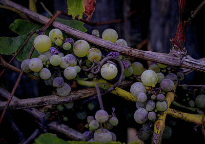 Photograph - Pre-wine by Traci Asaurus