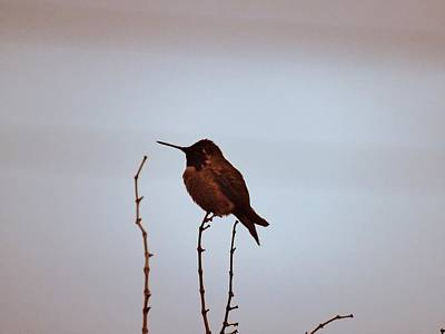 Photograph - Precarious Perch by Judy Kennedy
