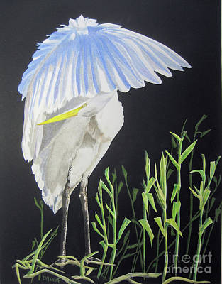 Painting - Preening Egret by Diane Marcotte