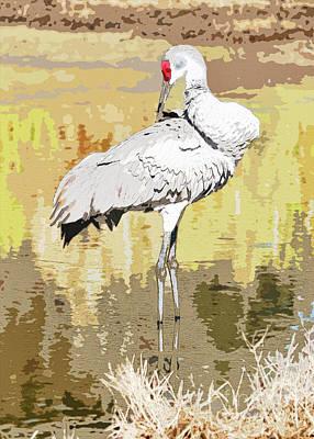 Photograph - Preening Sandhill In The Marsh Digital Art by Carol Groenen