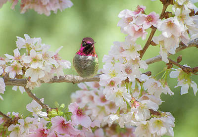 Photograph - Pretty In Pink Blossoms by Lynn Bauer