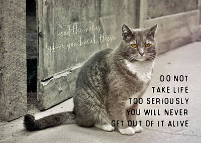 Pretty Kitty Quote Art Print by JAMART Photography