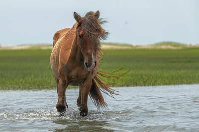 Photograph - Pretty Mare In The Water Paintography by Dan Friend