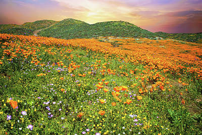 Photograph - Pretty Poppy Superbloom Sunset In Walker Canyon by Lynn Bauer