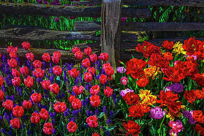 Photograph - Pretty Princess And Colorfuyl Tulips by Garry Gay