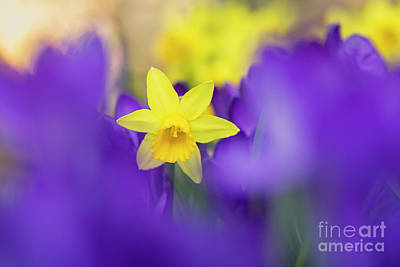 Photograph - Pretty Through Purple by Tim Gainey
