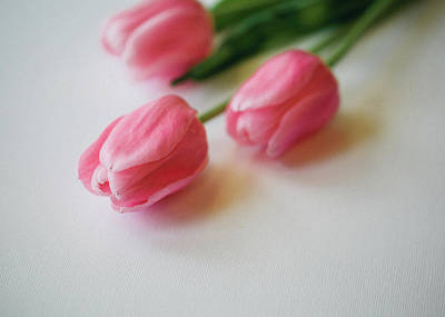Fragility Photograph - Pretty Tulips by Melissa Deakin Photography