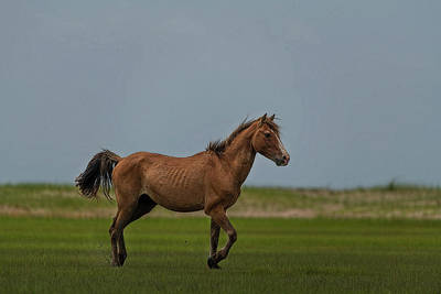 Photograph - Pretty Wild Horse Showing Off by Dan Friend
