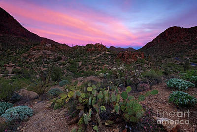Photograph - Prickly Pear Sunset by Mike Dawson