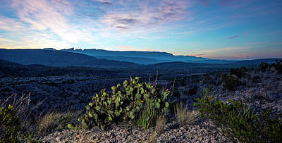 Photograph - Prickly Sunrise by David Morefield