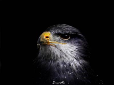 Photograph - Pride by Bernd Hau