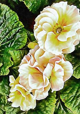 Photograph - Primrose Glory by Dorothy Berry-Lound