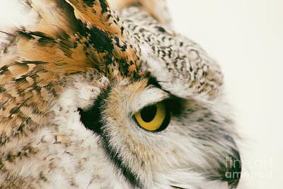 Photograph - Profile Of A Great Horned Owl by Sheila Skogen