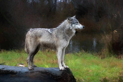 Photograph - Profile Of Timber Wolf - Paintography by Dan Friend