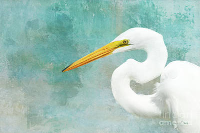Photograph - Protrait Of A Great Egret by Beve Brown-Clark Photography