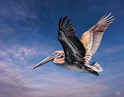 Photograph - Proud Pelican by Endre Balogh