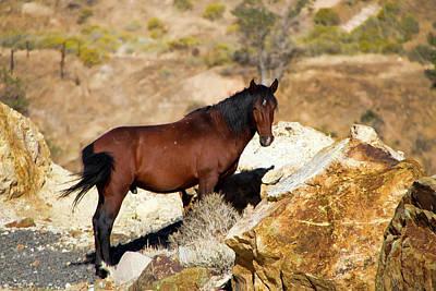 Photograph - Proud Wild Bay Stallion by Waterdancer