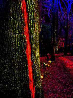 Photograph - Psychedelic Night Forest Trees In Highgate Woods 552 by Artist Dot