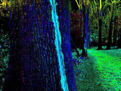 Photograph - Psychedelic Night Forest Trees In Highgate Woods 561 by Artist Dot