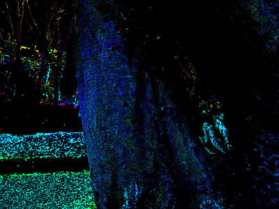 Photograph - Psychedelic Night Forest Trees In Highgate Woods 651 by Artist Dot