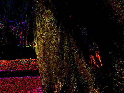Photograph - Psychedelic Night Forest Trees In Highgate Woods 652 by Artist Dot
