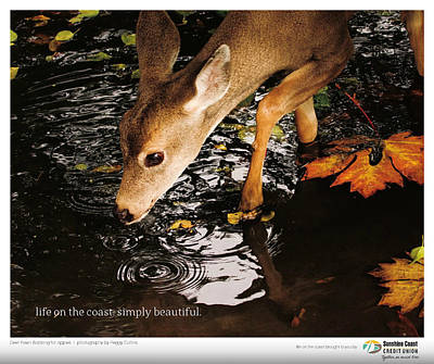 Photograph - Published In Zoom Magazine - Fall Fall 2015 Edition - Back Cover by Peggy Collins