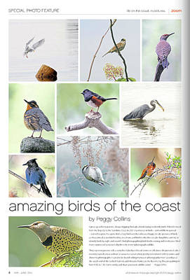 Photograph - Published In Zoom Magazine - May - June 2010 - Birds Of The Coast by Peggy Collins