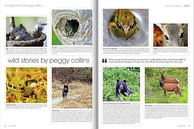 Photograph - Published In Zoom Magazine - My Wildlife Stories - Summer 2012 Edition  by Peggy Collins