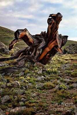 Photograph - Puff The Magic Dragon by Jim Garrison