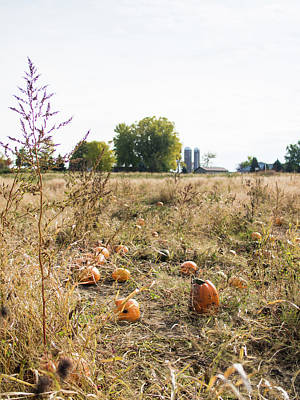 Photograph - Pumkins In Field by Whitney Leigh Carlson