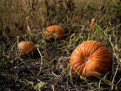 Photograph - Pumkin's Resting by Whitney Leigh Carlson