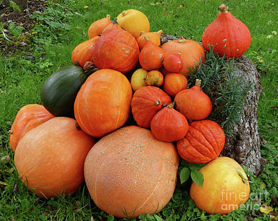 Photograph - Pumpkin Collection by Phil Banks