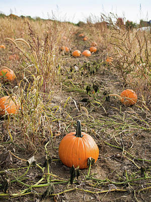Photograph - Pumpkin Farm by Whitney Leigh Carlson