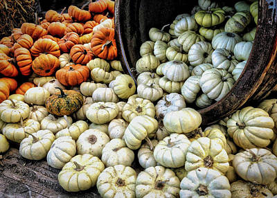 Photograph - Pumpkin Harvest by Steph Gabler