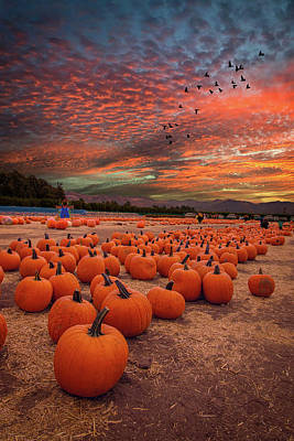 Photograph - Pumpkin Harvest Sunset by Lynn Bauer