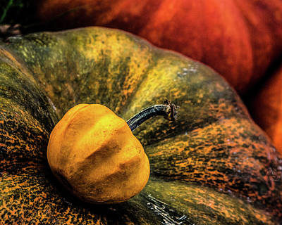 Photograph - Pumpkin by Michael Arend