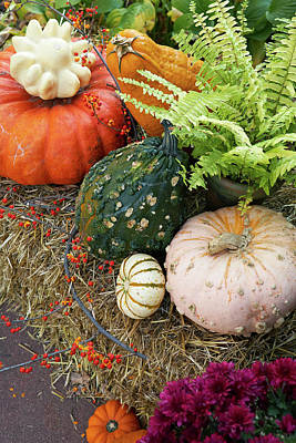 Photograph - Pumpkin Party by Garden Gate magazine
