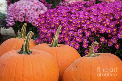 Photograph - Pumpkin Pink by Karin Pinkham