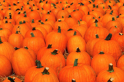 Photograph - Pumpkins by David Davis