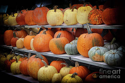 Photograph - Pumpkins For Sale by Karen Adams