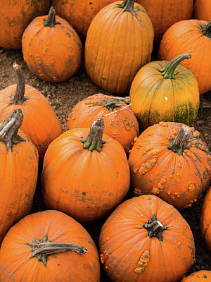 Photograph - Pumpkins Of Different Shapes by Whitney Leigh Carlson