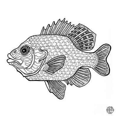 Drawing - Pumpkinseed Fish by Amy E Fraser