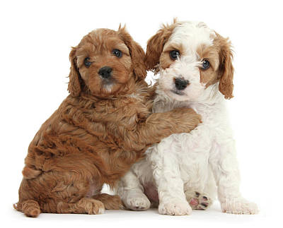 Photograph - Puppies Hugging by Warren Photographic