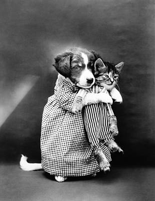 Animals Photos - Puppy Holding A Kitten - The Nurse - Harry Whittier Frees by War Is Hell Store