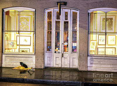 Photograph - Puppy Trying To Stay Warm In New Orleans by John Rizzuto