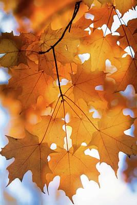 Photograph - Pure Arizona Autumn Gold  by Saija Lehtonen