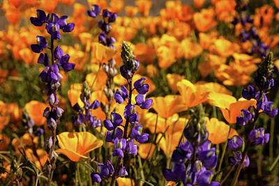 Photograph - Purple And Gold by Rick Furmanek