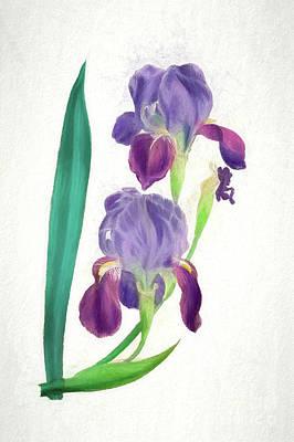 Nikki Vig Digital Art - Double Purple Bearded Iris Botanical Chalk Art by Nikki Vig