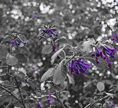 Photograph - Purple Dreams by Lynda Anne Williams